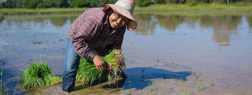Phawadee Suphansai (35) von der Organic Jasmine Rice Producer Group (OJRPG) in Thailand