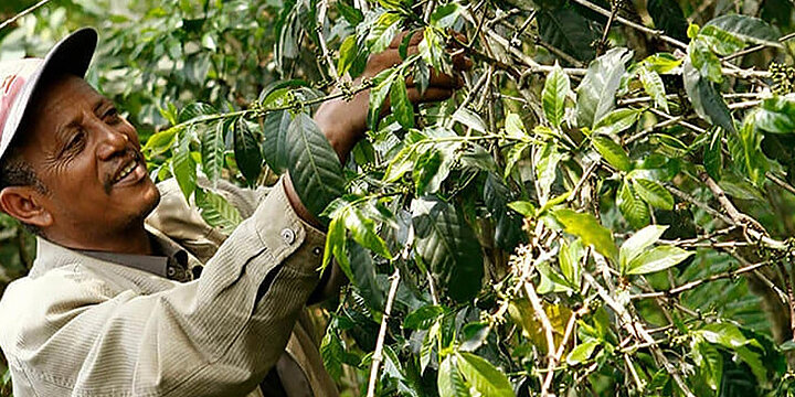 "Kaffeebauer der Fairtrade-Kooperative "" Kafa Forest Coffee Farmers Cooperative Union"""